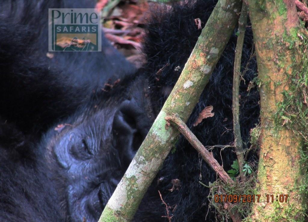 8 Days Rwanda Uganda Double Safari