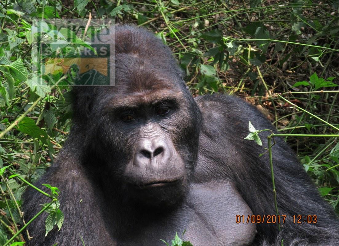 3 days Gorilla Rwanda Uganda Safari