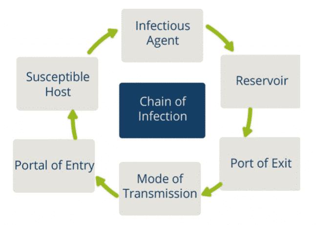 Catena di infezione - coronavirus SARS-CoV2