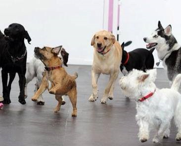 how to start a dog daycare
