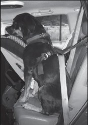 Safety a Challenge When Traveling With Pets