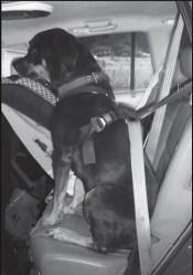 Pet Restraint Harness
