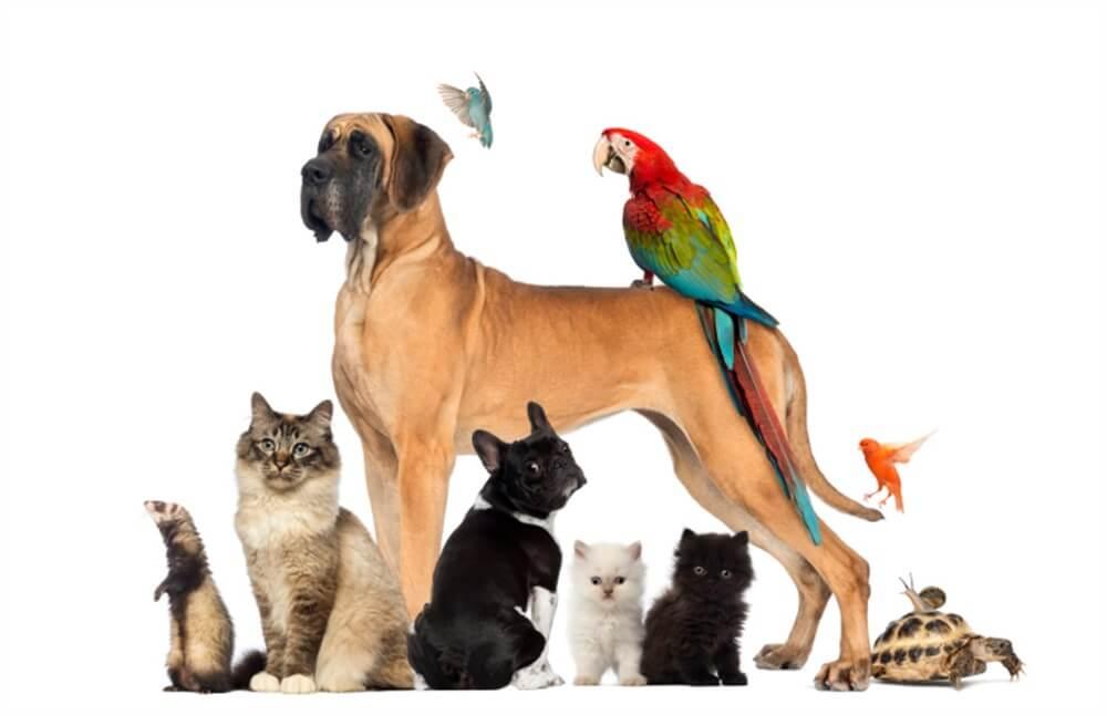 merawat aneka macam hewan peliharaan