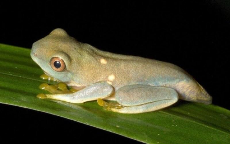 katak muda sebagai salah satu tahap metamorfosis katak