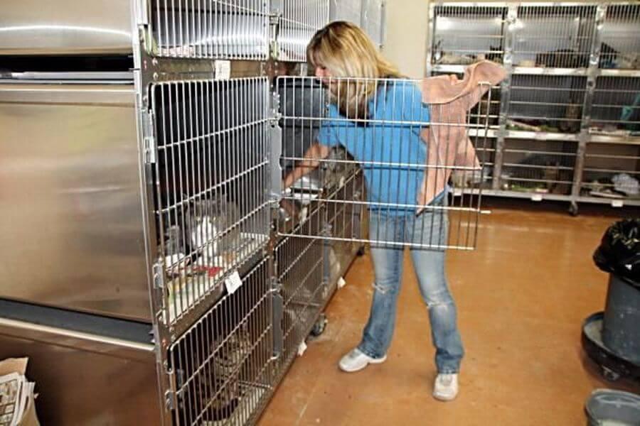 membersihkan kandang kucing