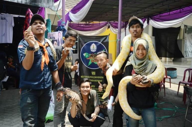memelihara ular