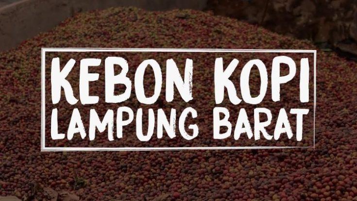 kopi lampung aroma nikmat