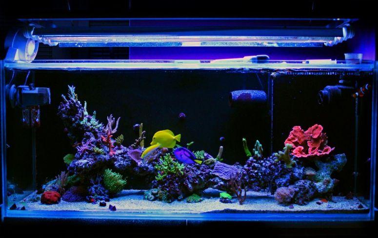 menambah lampu untuk mempercantik aquarium