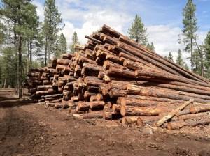 logging safety