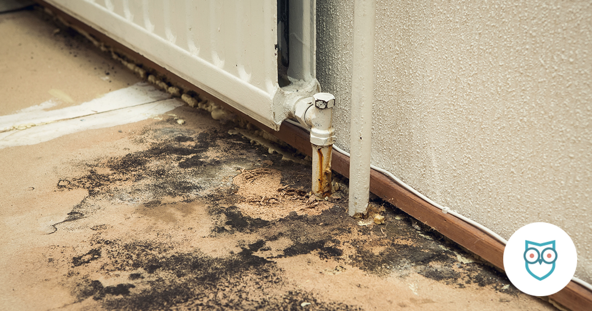 what to do if you find toxic black mold