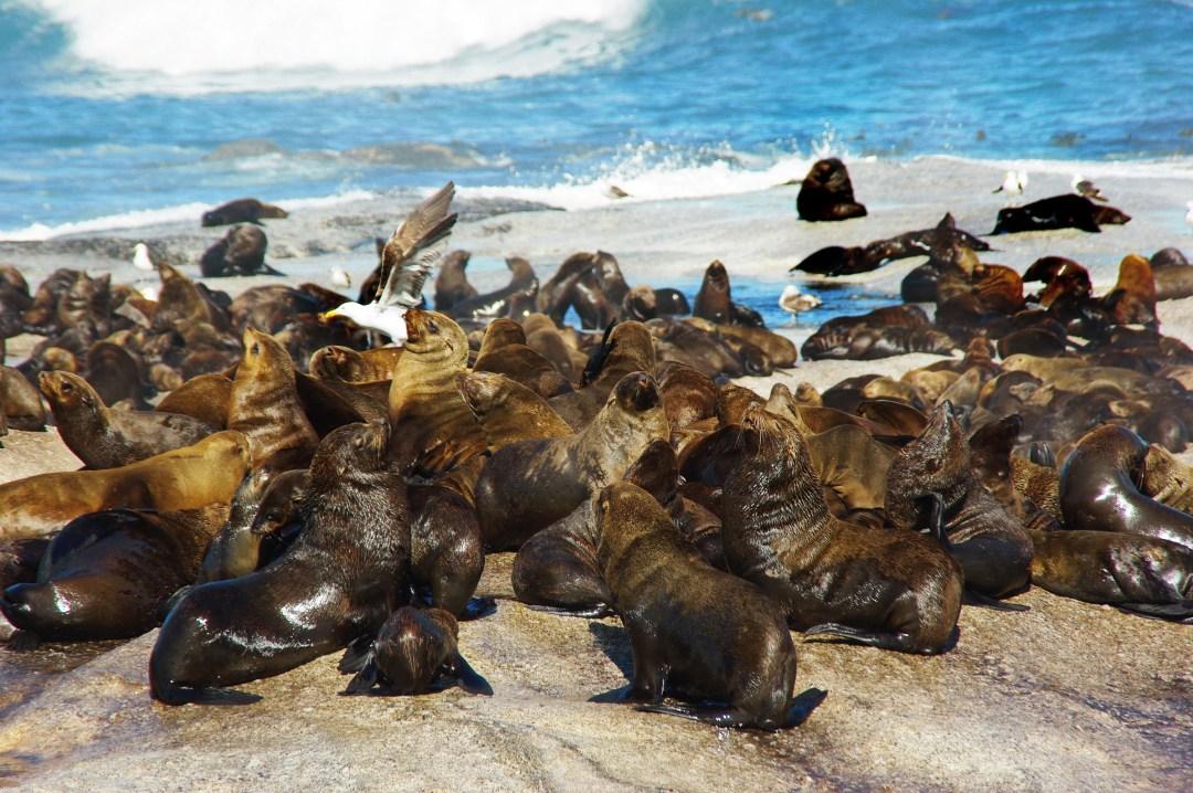 Robben Island_Dezalb