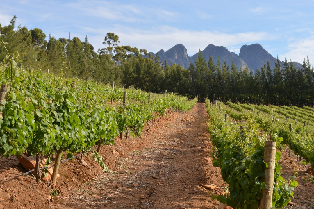 Winelands_HeidNydegger