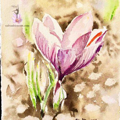 fleur-safran-saffron-nilooaquarelle-safranbienetre