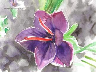La fleur de safran, aquarelle, no. 2. sujet: la fleur de safran