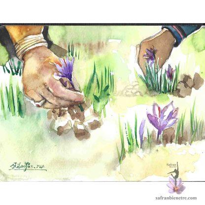 La fleur de safran, artiste dessin, no. 3. Sujet: Les mains qui récoltent le safran