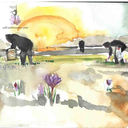 La fleur de safran, artiste dessin, no. 5 Sujet: La récolte matinale