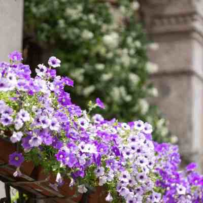 Balcony Decoration: 5 Design Elements for a Great Balcony