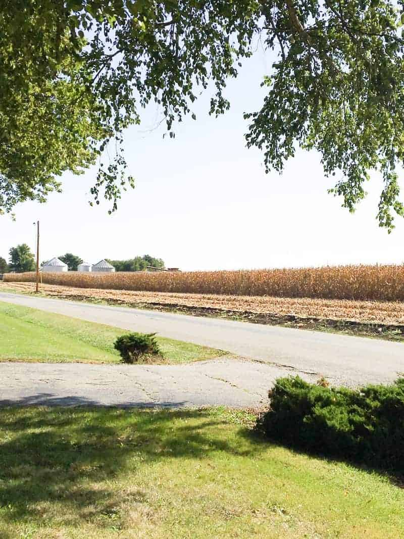 Photo of a cornfield that is a part of country life.