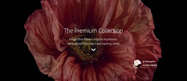 Adobe-stock-premium