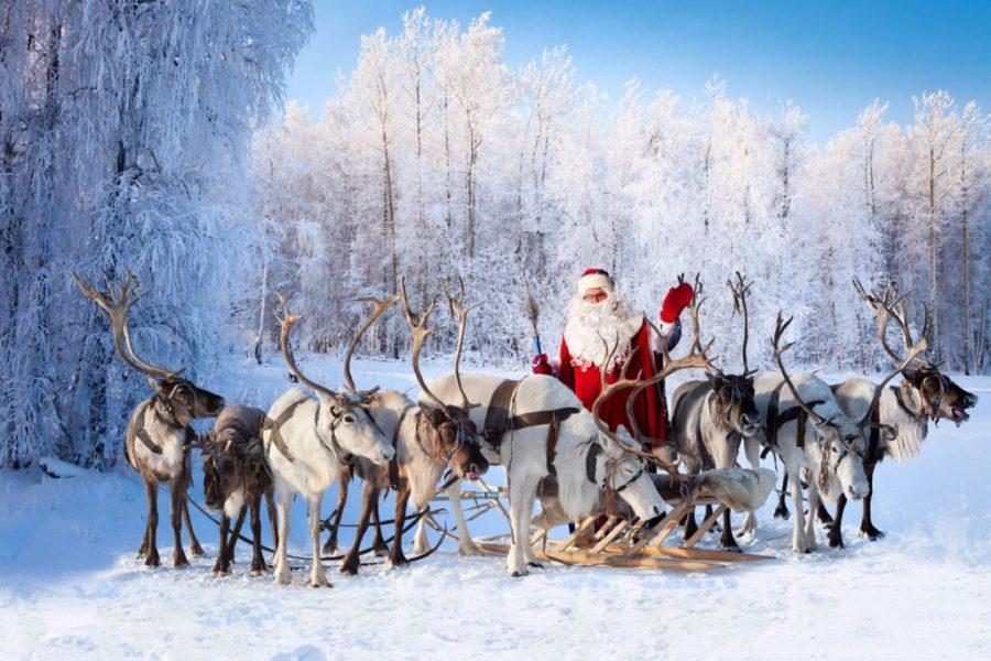 animali fantastici renne
