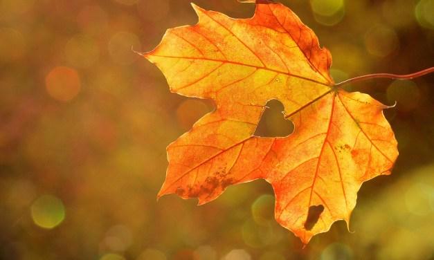Ceremonia de Equinoccio de otoño : Preparándonos para soltar