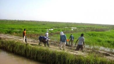 Photo of موريتانيا.. إطلاق حملة زراعية لاستغلال 5000 هكتار