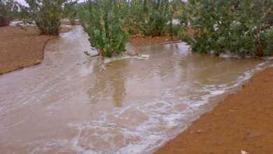 Photo of موريتانيا.. أمطار متفاوتة في مدن وقرى اترارزة