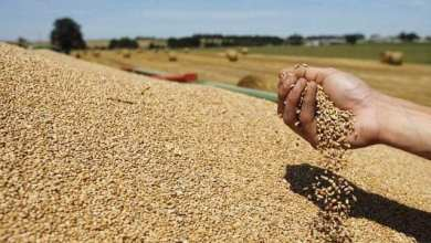 Photo of الساحل.. 2.4 مليون شخص بحاجة لمساعدات غذائية