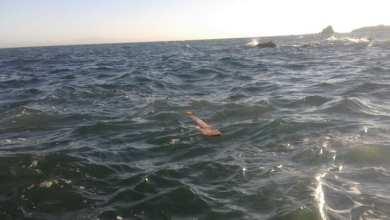 Photo of «الناجي الوحيد».. لغز مُحير في غرق مهاجرين موريتانيين