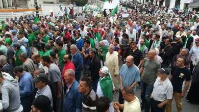 متظاهرون في الأسبوع 14 من الاحتجاجات- موقع كل شيء عن الجزائر