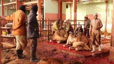 Photo of الأمم المتحدة تطالب بخفض استهلاك اللحوم