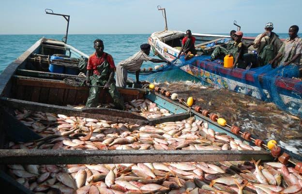 سمك موريتانيا: هاشتاك «تويتر» في لبنان