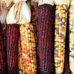 هل-توفر-الفواكه-والخضروات-العضوية-حماية-ضد-السرطان---الذرة-