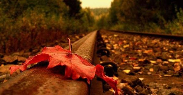 Belki de haklıydı sonbahar...!Düşmeliydi o yaprak.Hiç yazılmamalıydı aşk şiirleri.Hiç kurulmamalıydı sonsuzluk hayalleri.En azından kimse kimseye ömrüm demezdi.Ve aşkların ömrü de kısa bir mevsime heba edilmezdi.Vakit kaybetmeden yakılmalıydı tüm mektuplar.Sadece yağmur sırılsıklam etmeliydi sevmeye meyil edenleri.Hem belki ağladığımızı da kimseler görmezdi.Hani sevdik de  ne oldu yanımızda kim var.?Şimdi daha iyi anladım ki en delikanlı mevsim SONBAHAR.! Sahildeki Şair Sinan Yıldızlı