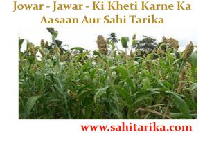 Jowar - Jawar - Ki Kheti Karne Ka Aasaan Aur Sahi Tarika