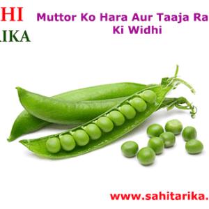 Muttor Ko Hara Aur Taaja Rakhne Ki Widhi