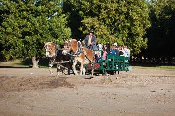 Sahuarita Pecan Festival Orchard Rides