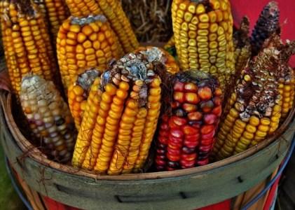 Hybridization, breeding and hybrid cultivars