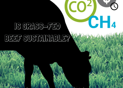 Grass-fed Beef; is it Sustainable?