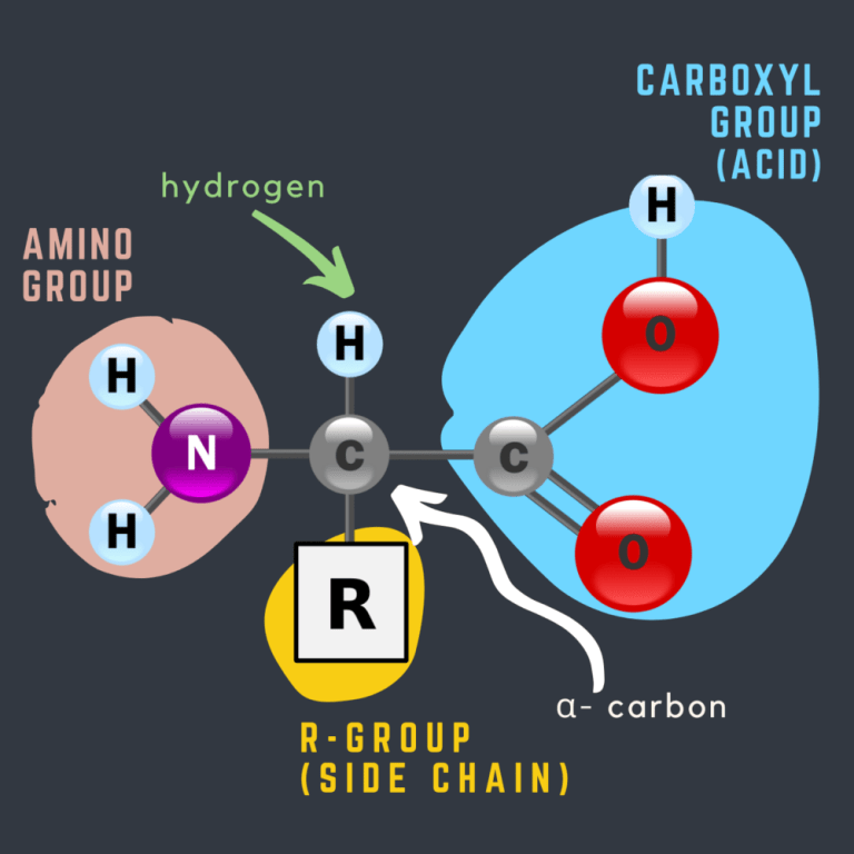 Amino Acids formation
