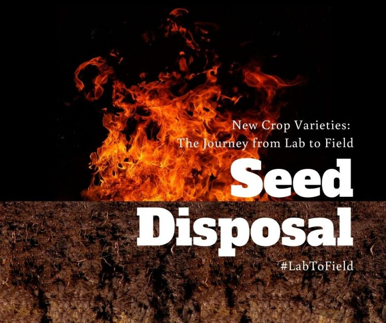 Seed disposal #LabToField