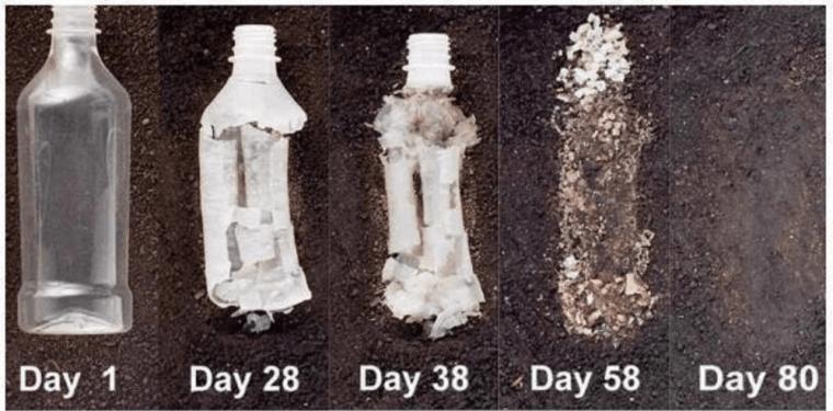 Biodegrading of hemp plastic