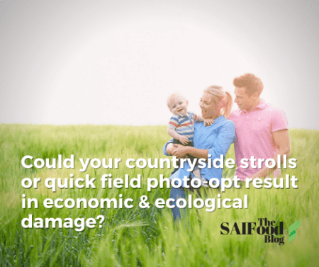 A couple and child standing in a field of green wheat getting family photos. Text that asks ' could your countryside strolls or quick field photo-opt result in economic & ecological damage?