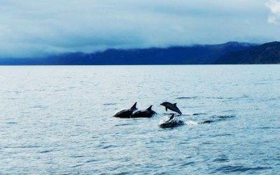 Dolphins off Gairloch with Sail Badachro