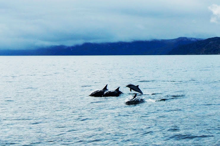 Dolphins off Gairloch with Sail Badachro