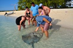 Feeding Sting Ray