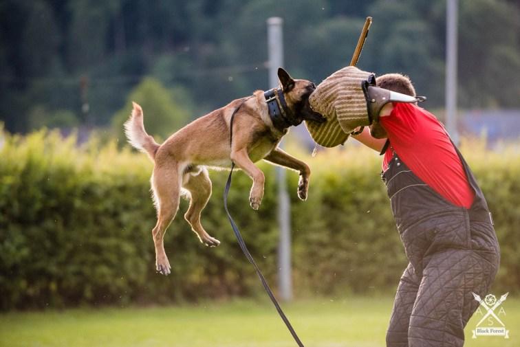 Hunde-Juli16 -AdrianSailer-3