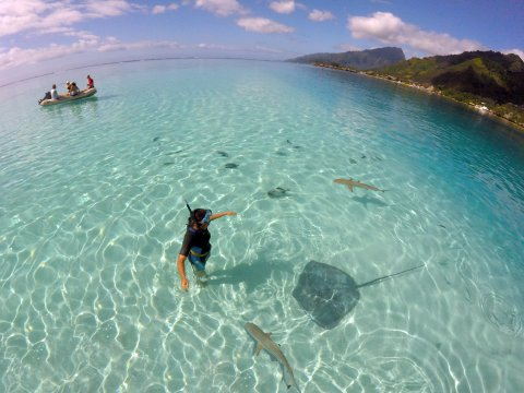 In the water with stingrays and sharks