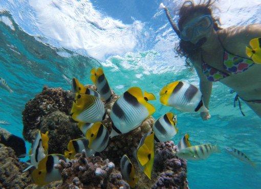 Tropski akvarij nedalec od sidrisca