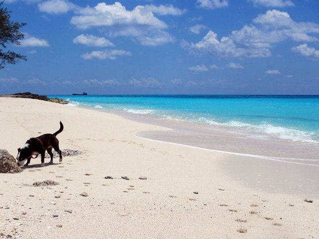Sailing_dog_bimini
